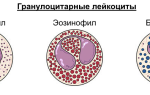 gra в анализе крови норма у детей