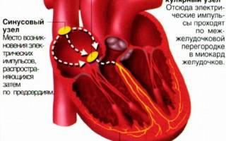 что означает горизонтальное положение электрической оси сердца