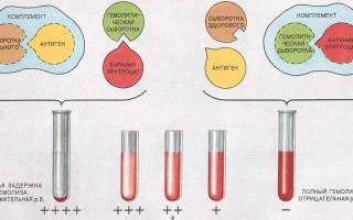 анализ крови на реакцию вассермана сколько времени делается