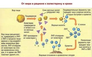 что означает ldl в биохимическом анализе крови