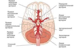 артерии и вены головного мозга и сосудов головного мозга