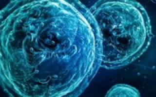 что такое незрелые гранулоциты в анализе крови повышены