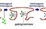 антитела к тг повышены что это значит