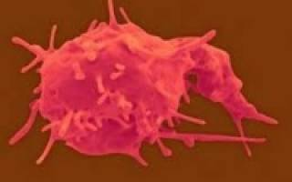 что означает пониженное содержание тромбоцитов в крови