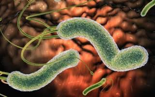 антитела к хеликобактер пилори норма в крови